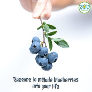 Reasons to include Blueberries into your life